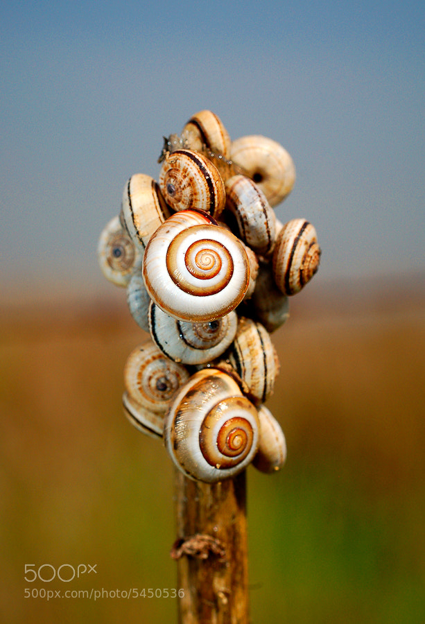 Photograph Snails Candy by Adam Shul on 500px