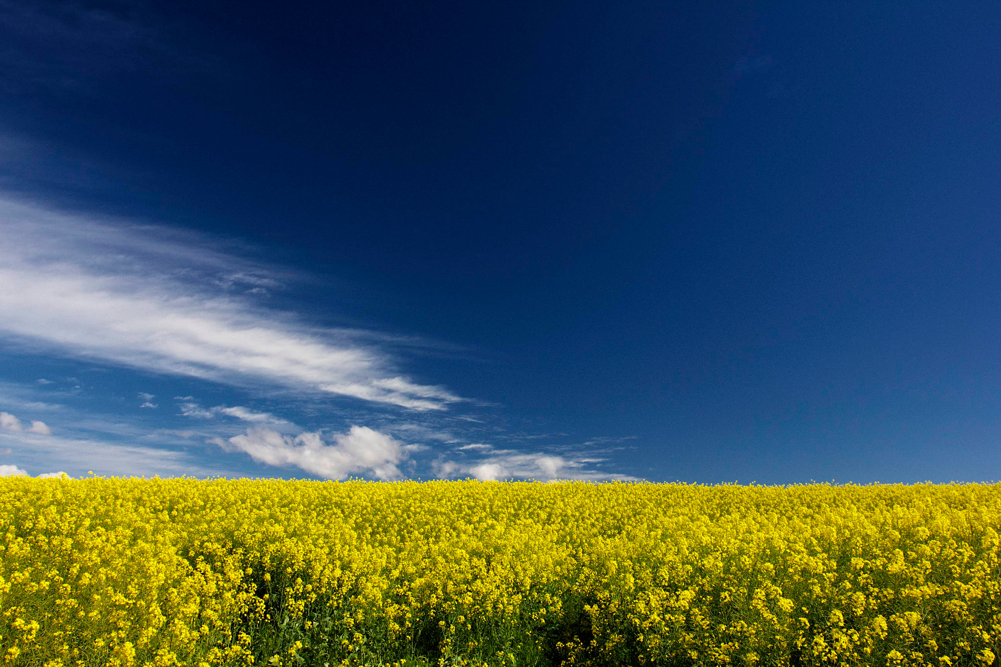 Photograph Yellow field, deep blue sky by Guido Merkelbach on 500px