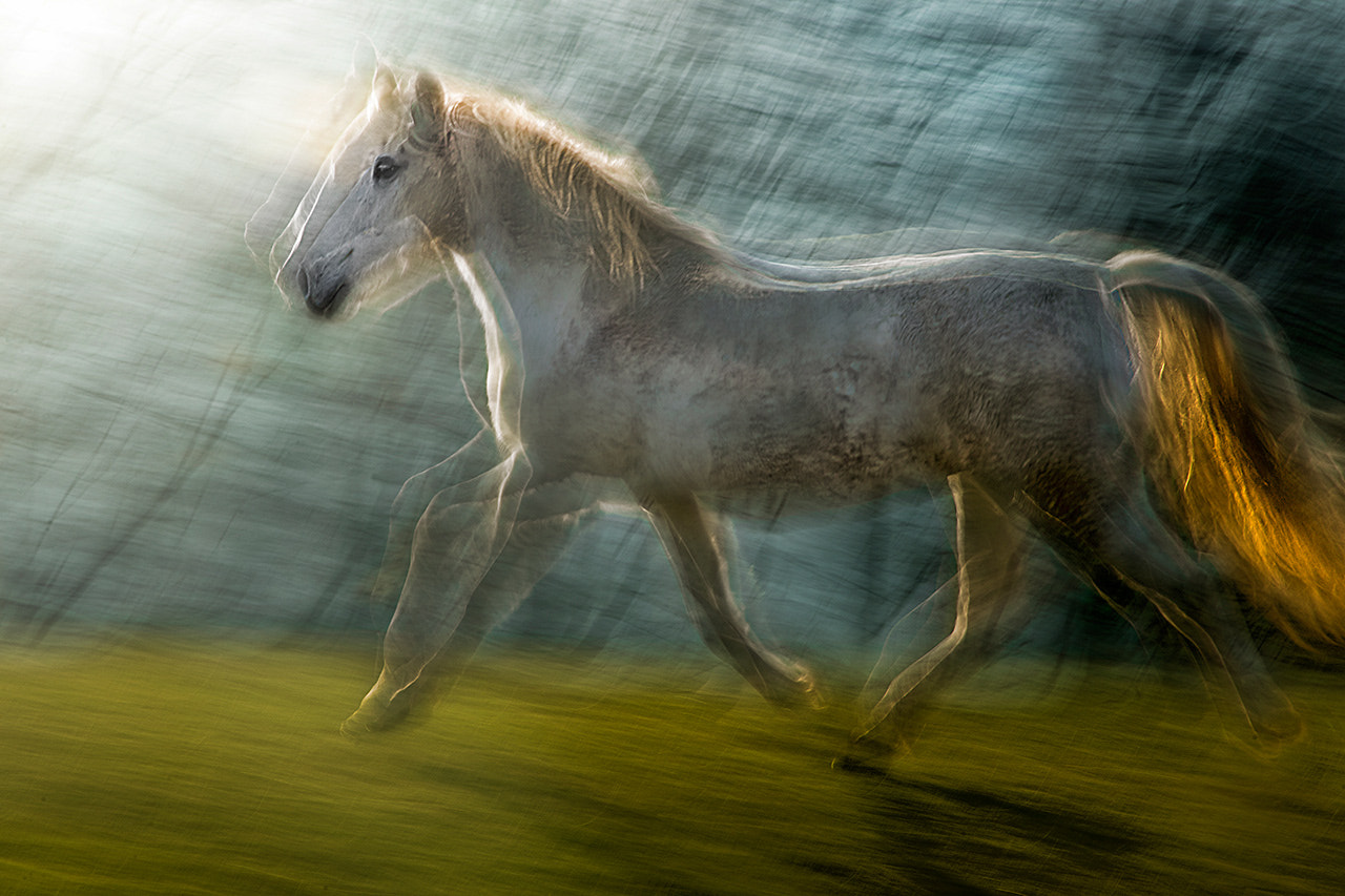 Photograph LIPIZZANER by Milan Malovrh on 500px