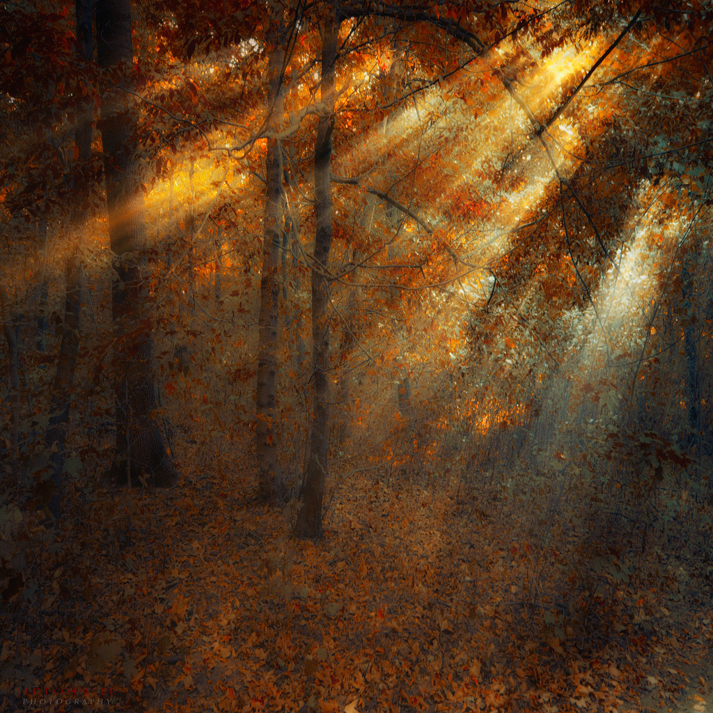 Photograph Shining Forest by Ildiko Neer on 500px