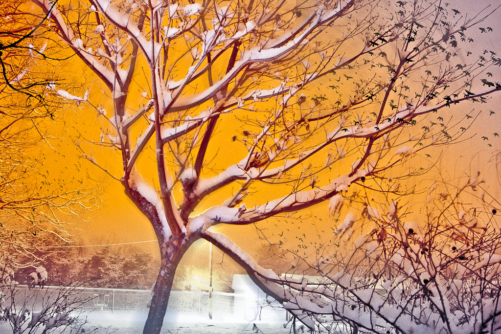 Photograph Tree afire by Colleen  Dubois on 500px