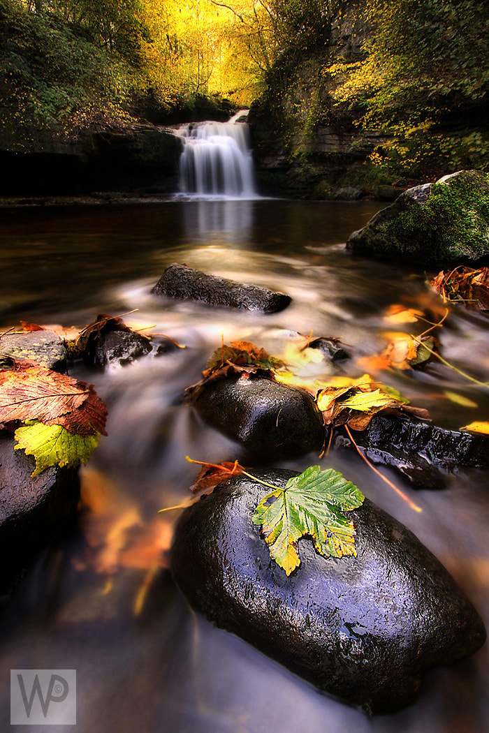 Photograph West Burton Falls by Wolfy pics on 500px