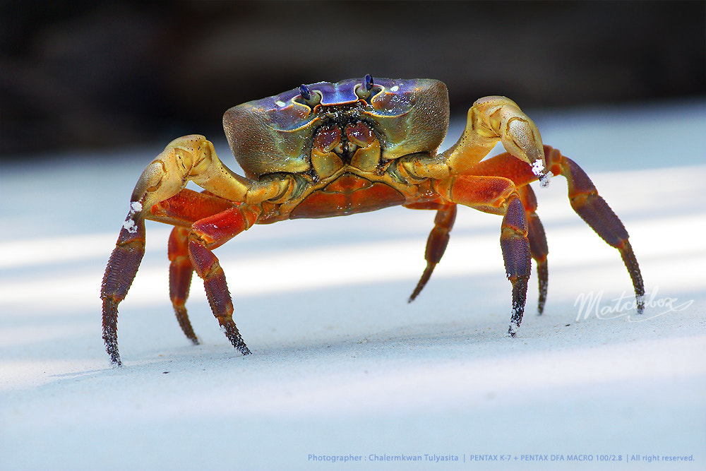 Photograph Chicken Crab ^_^ by Matcenbox  on 500px