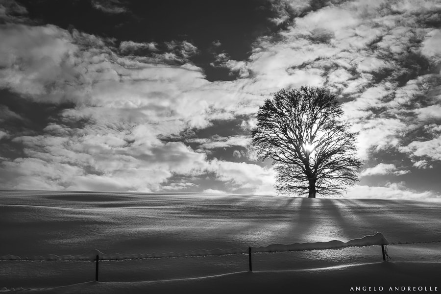 Photograph Inverno by Angelo Andreolle on 500px