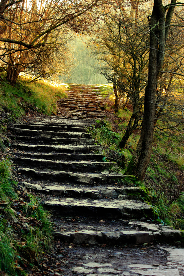 Steps at Dovedale