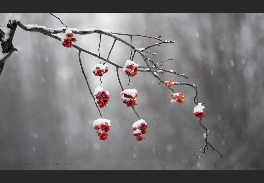 Bittersweet bush berries