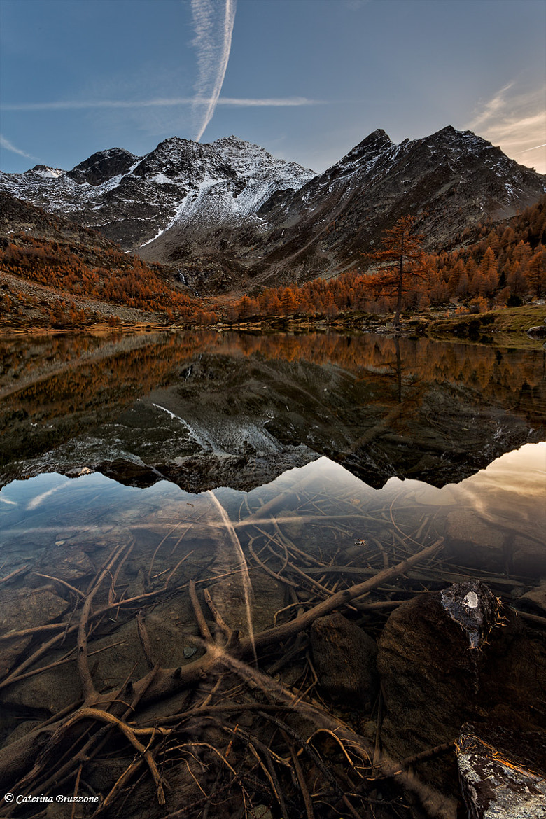 Photograph first snow by Caterina Bruzzone on 500px