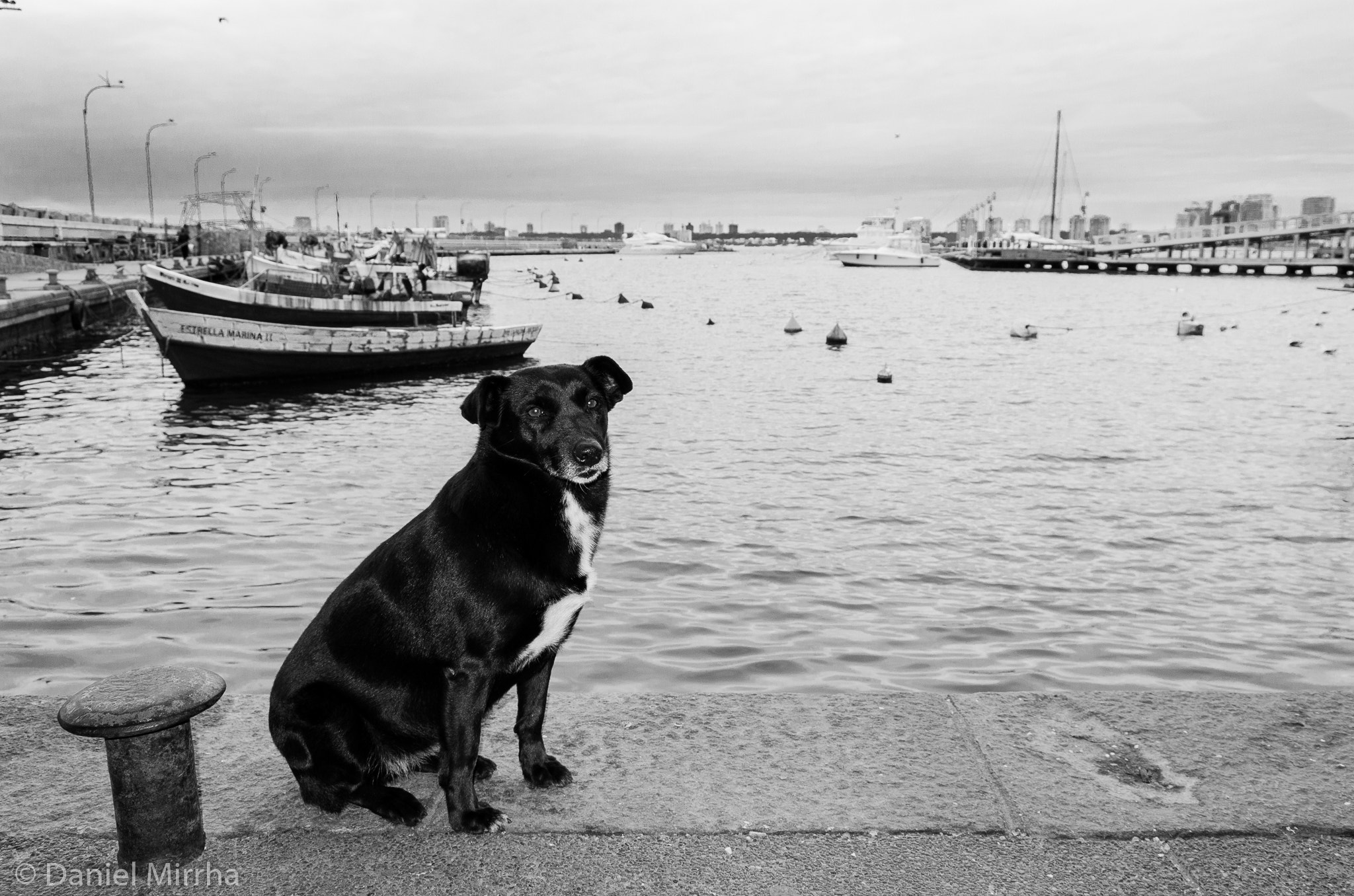 Photograph A dog by Daniel Mirrha Santos on 500px
