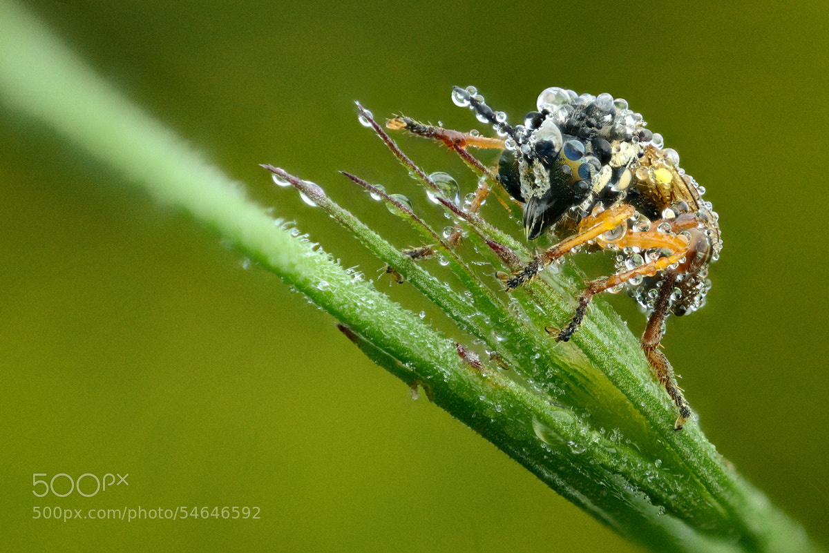 Photograph Wetness 2 by Velian Jagev on 500px