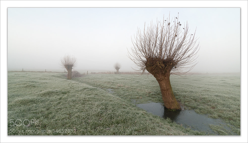 Photograph Misty en cold by Pascale schotte on 500px