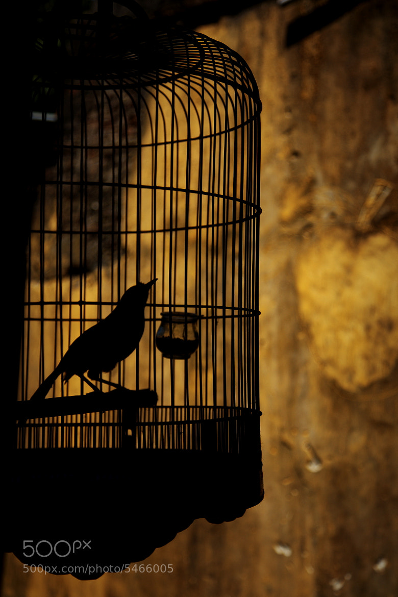 Photograph In a cage by Tashi Delek on 500px