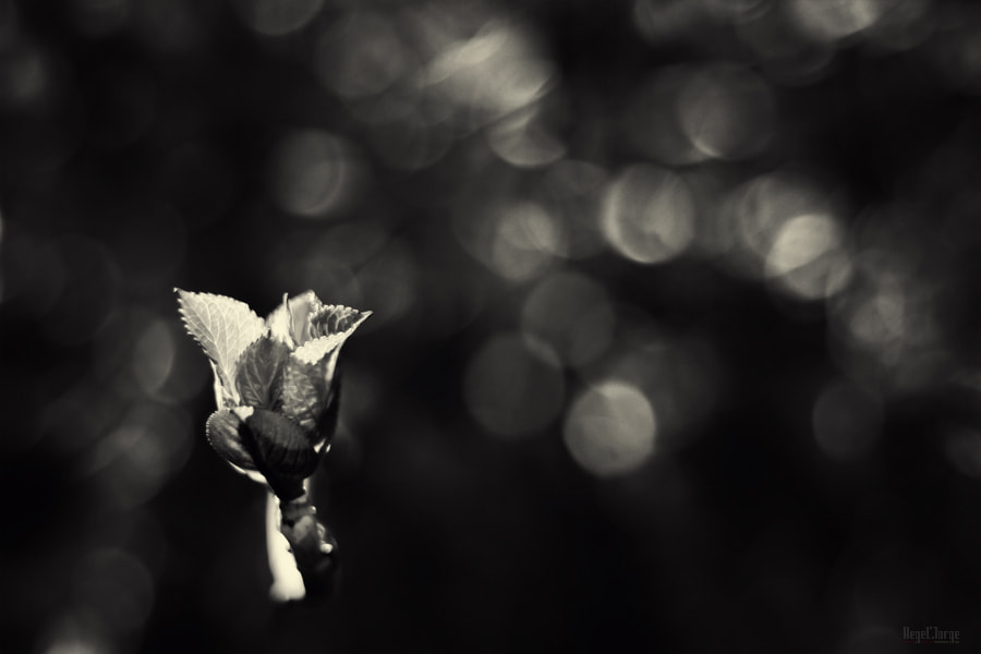 Photograph a touch of flower by Hegel Jorge on 500px
