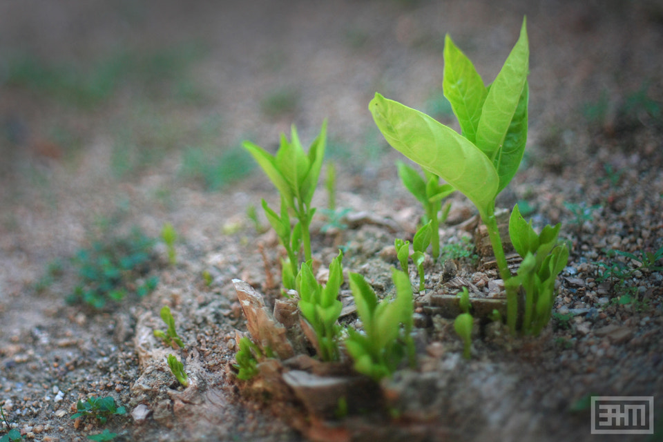 Photograph Small Tree by Muhammad Hilmi on 500px