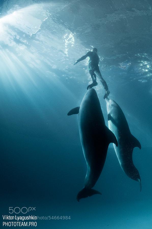 Photograph Aspiration to light by Viktor Lyagushkin on 500px