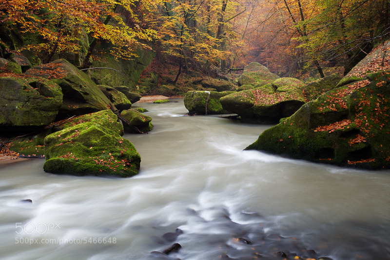 Photograph Fall Stream by Martin Rak on 500px