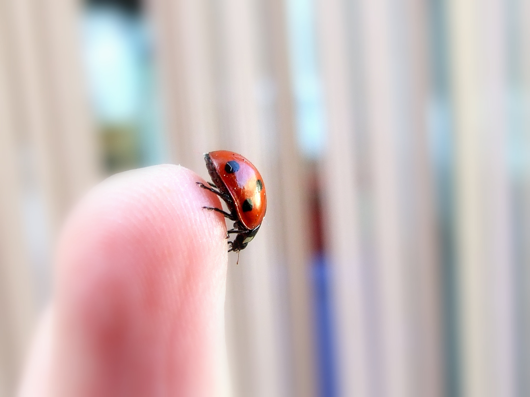Photograph Coccinelle by Mel Mel' on 500px