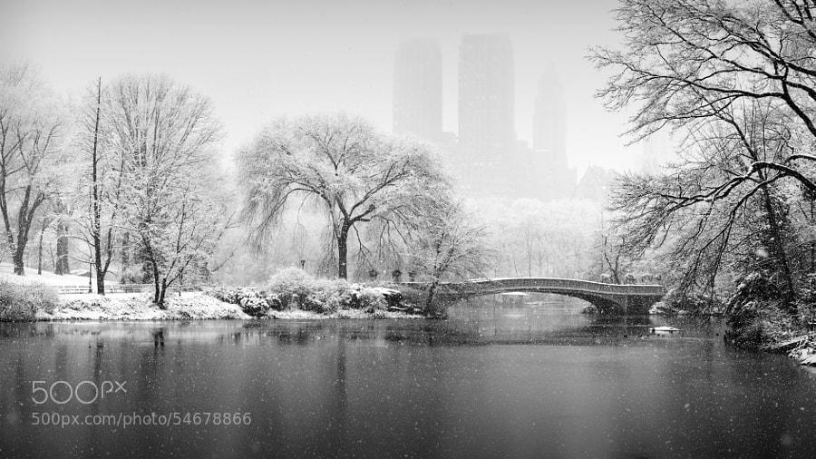 Central Park In Snow by Kevin Kim