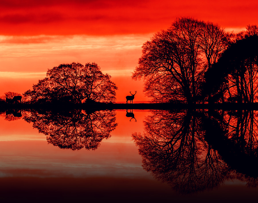Black stag red sky by TheMrGnu on 500px.com