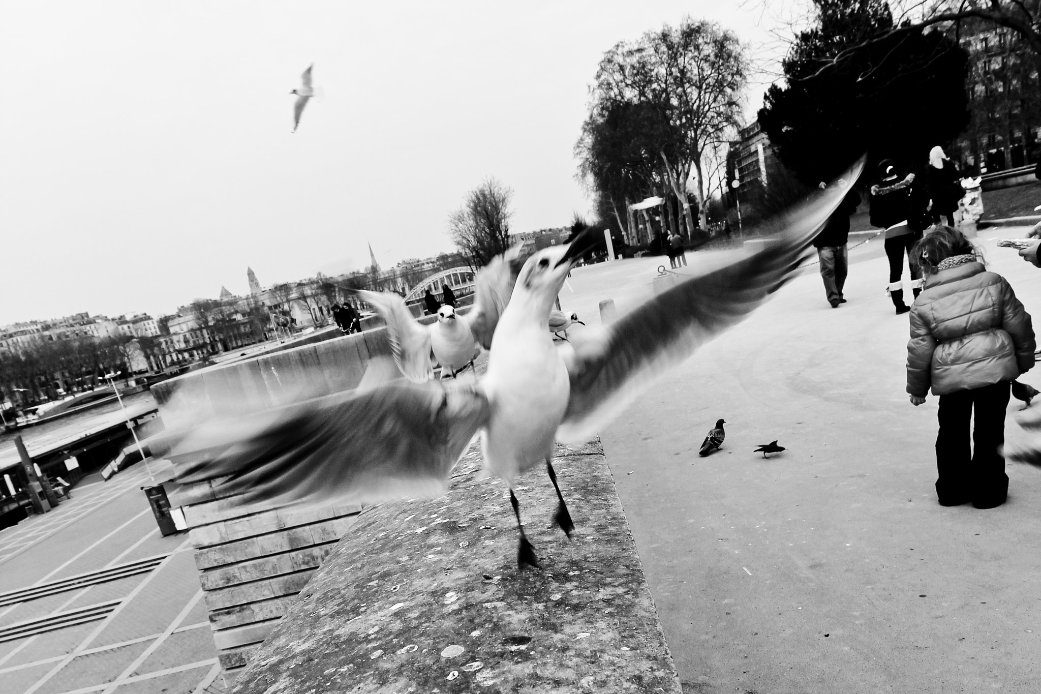 Photograph birds in paris by Enrico  on 500px