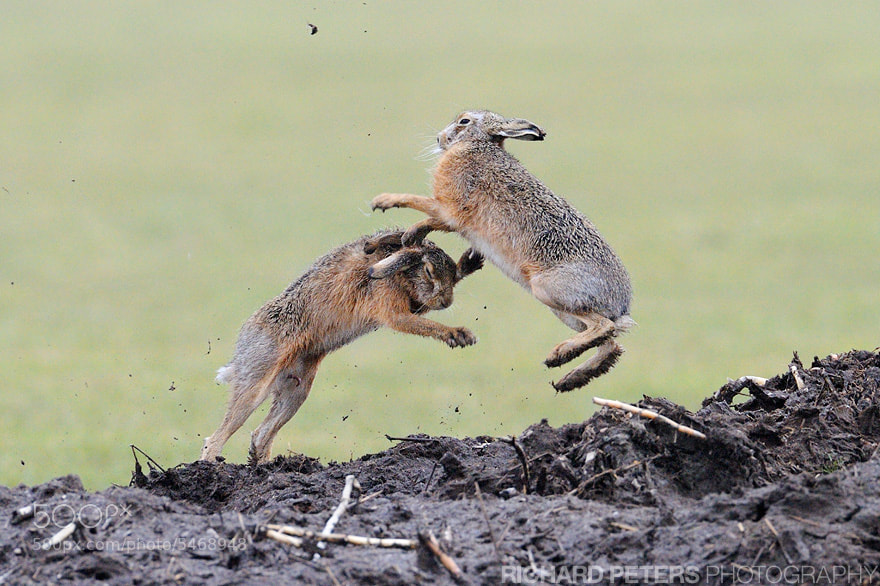 Photograph FIGHT by Richard Peters on 500px