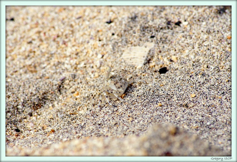 Photograph un trés petit Crabe by ISOP Greg on 500px