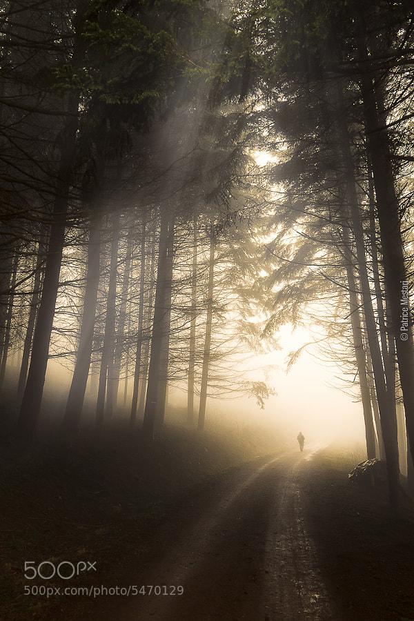 Photograph A l'orée du bois by Patrice MESTARI on 500px