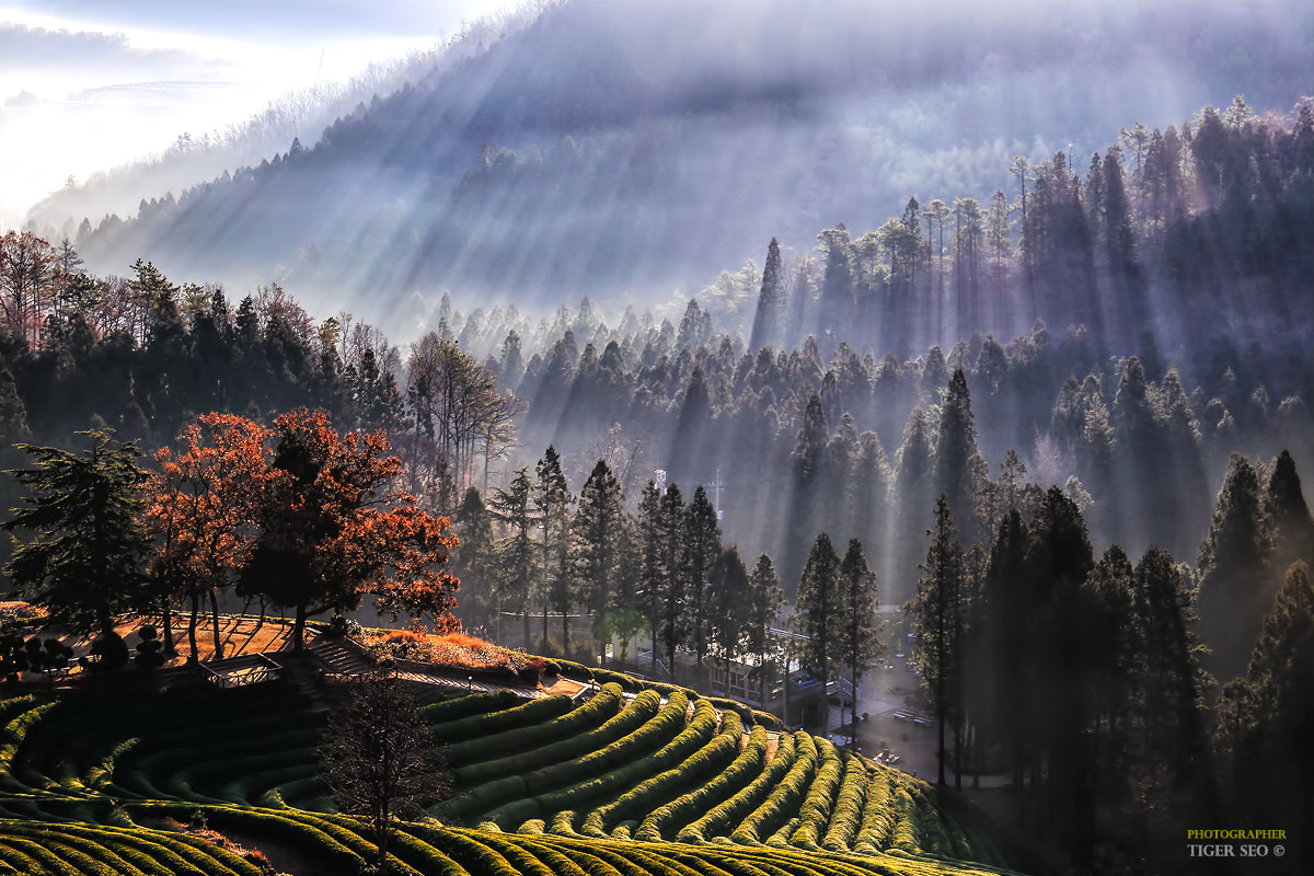 Photograph wonderful morning by Tiger Seo on 500px