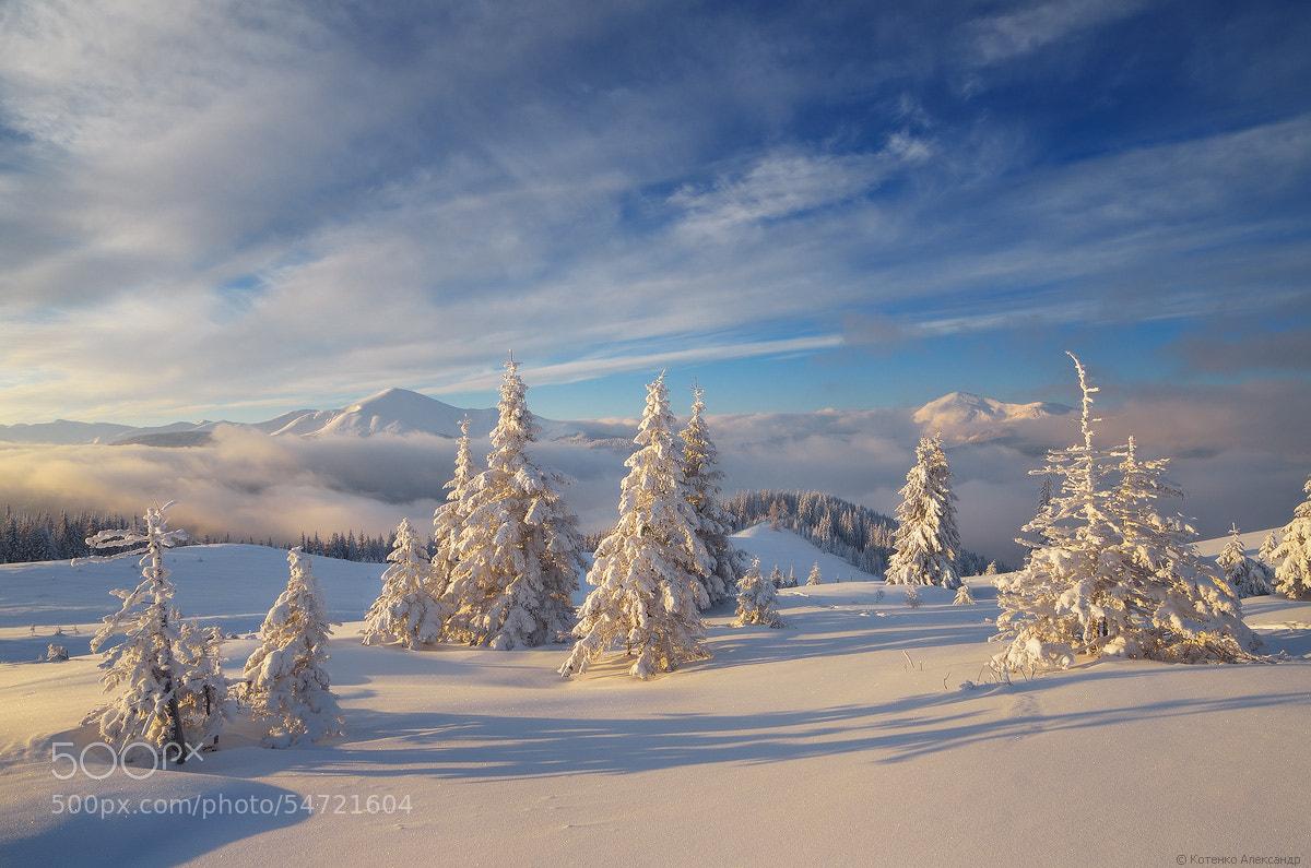 Photograph *** by Oleksandr Kotenko on 500px