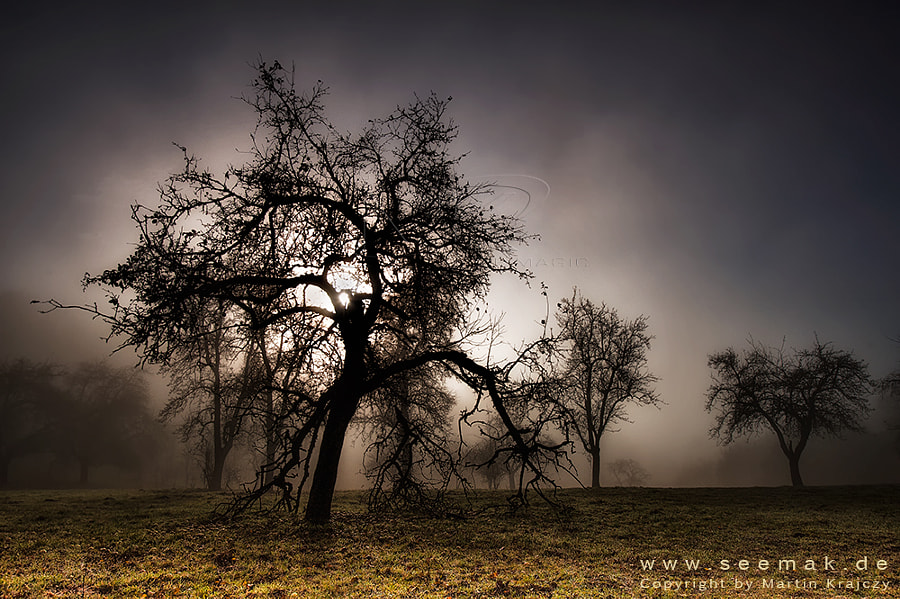 This apple tree still has some fruits laying around. The fog and sun created a mystic atmosphere. It was cold and wet but it was a great experience.   - PLEASE watch it on the black background-