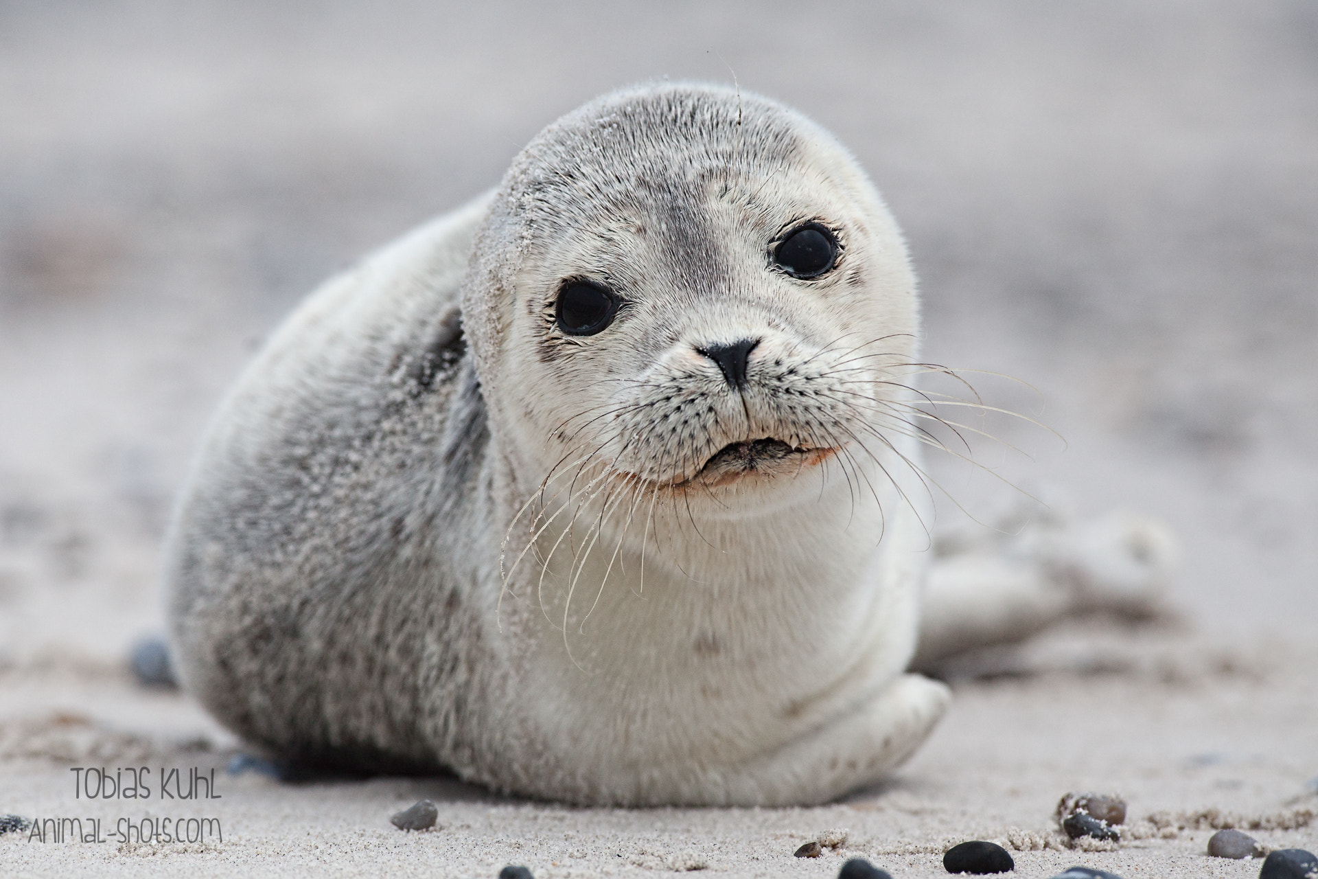 Photograph Cute Seal :) by Tobias Kuhl on 500px