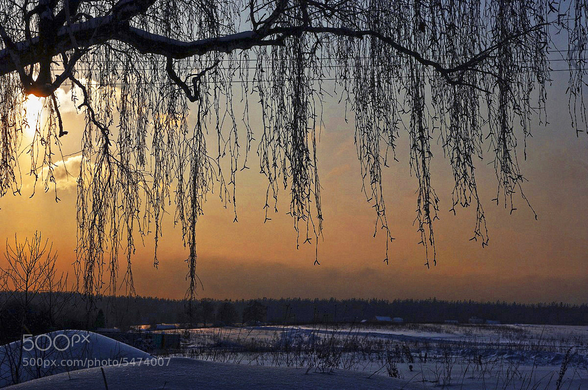 Photograph Winter evening1 by I'm Olga on 500px