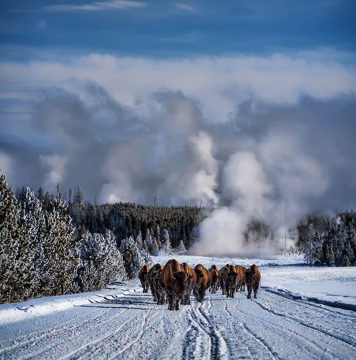 Photograph Bowling for Bison by Scott Kublin on 500px