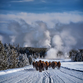 Bowling for Bison by Scott Kublin (HDRPhotographyBlog)) on 500px.com