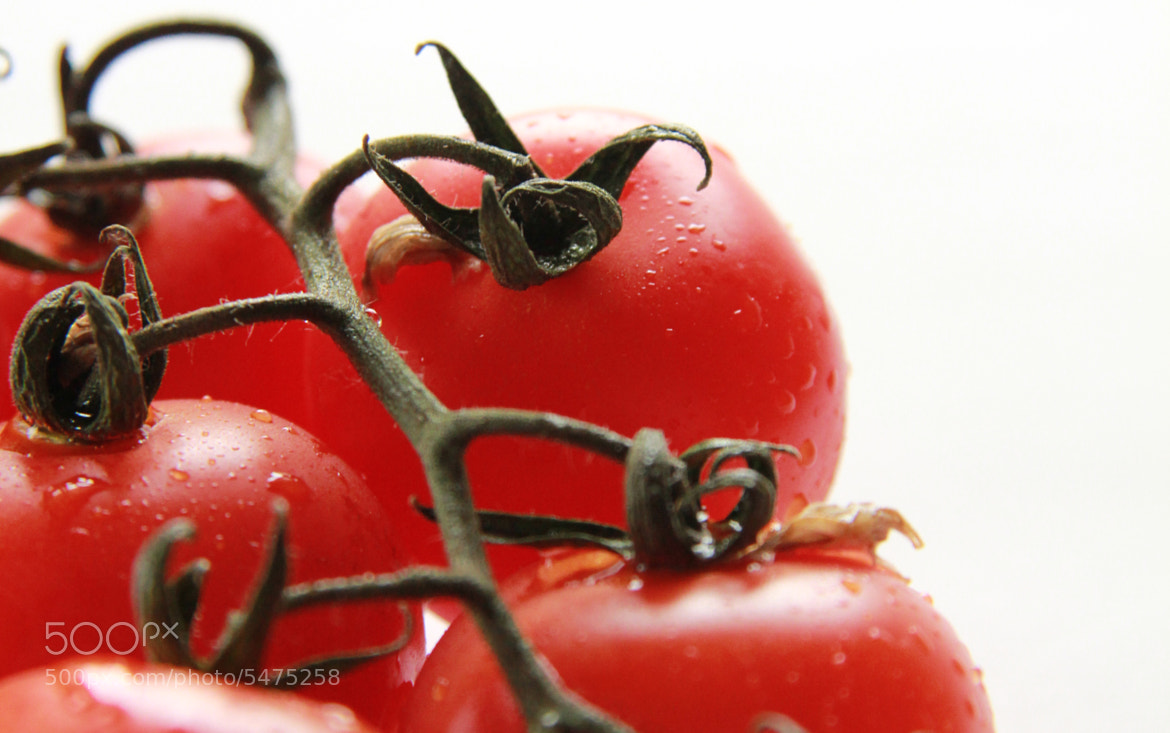 Photograph Tomatos by Hala Marar on 500px