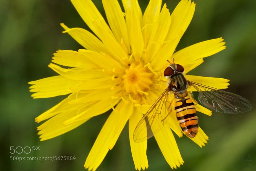 Photograph Yellow flower by Benno Pütz on 500px