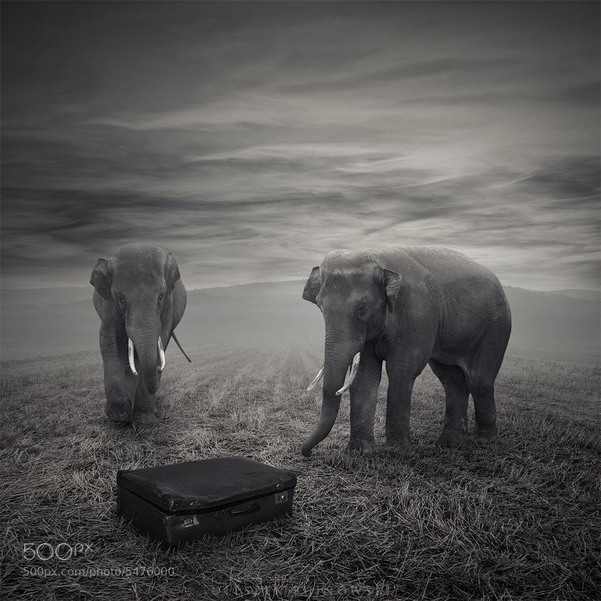 Photograph The suitcase by Leszek Bujnowski on 500px