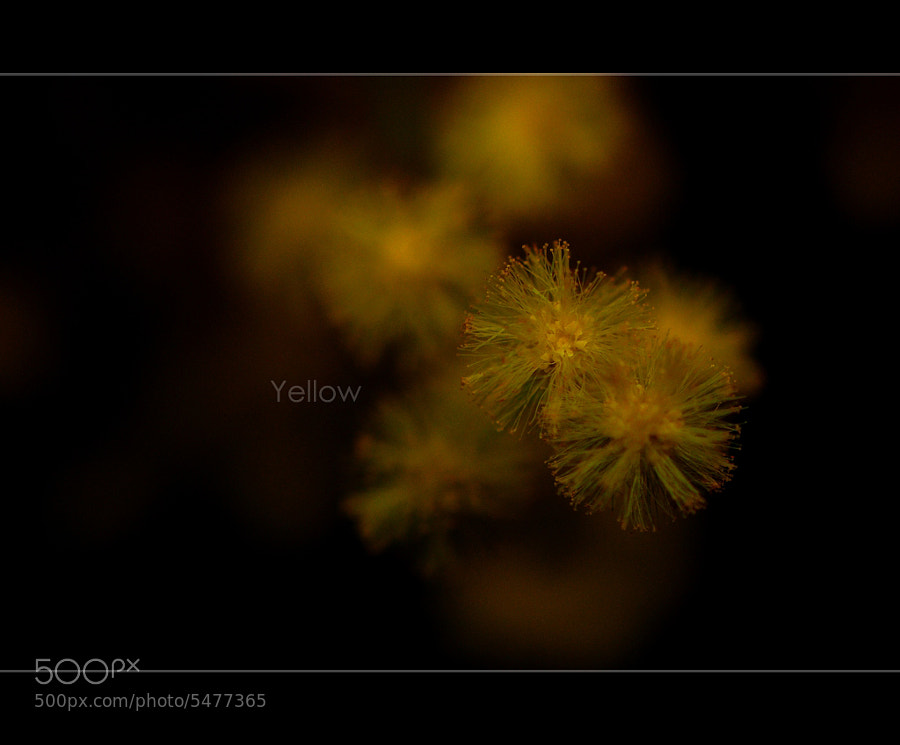 Yellow... by Klas Almqvist (Cobra65) on 500px.com