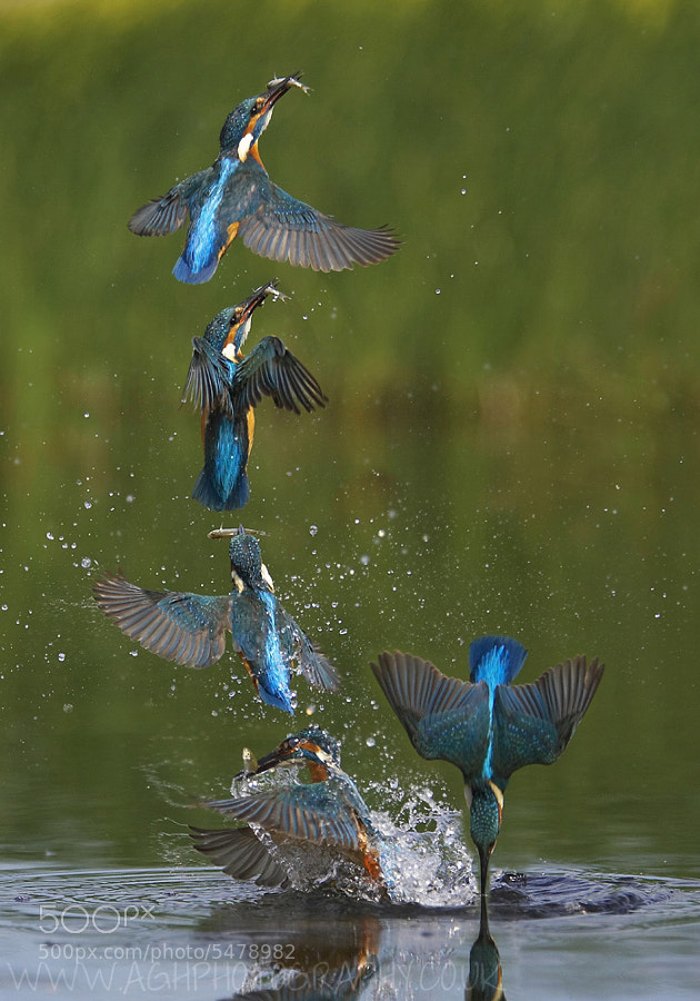 Photograph Kingfisher eruption sequence by Tony House on 500px
