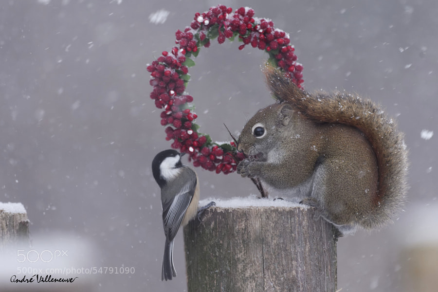 Photograph Tell me Red , do you receive all your relatives in your hole for Christmas by Andre Villeneuve on 500px