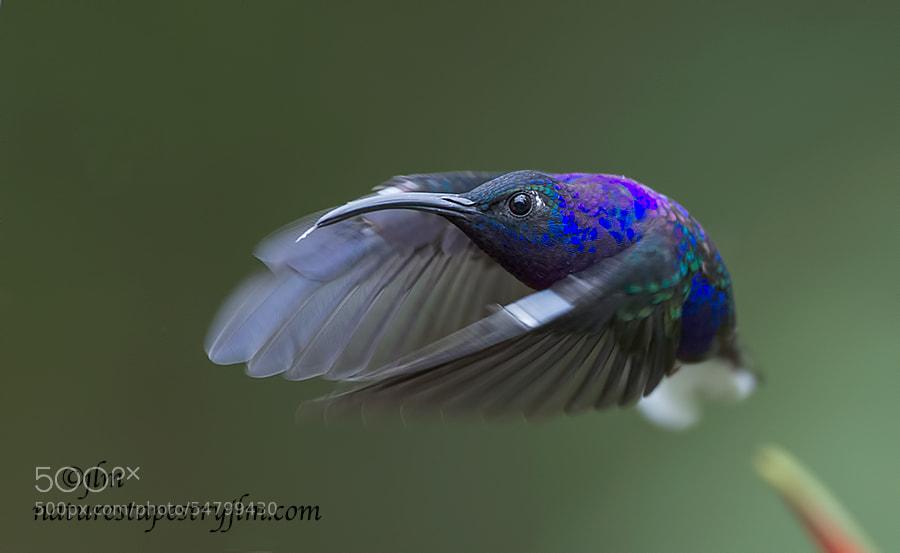 (Bird.鳥) - cover