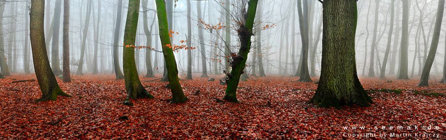 """This shot is composed out of 8 single frames during a typical autumn day in northern Germany....sometimes we also have sun :-) The fog created a spectacular stage for landscape photography. - use the black background -  This photo got an Bronze Award in """"The EPSON international pano awards 2014"""""""