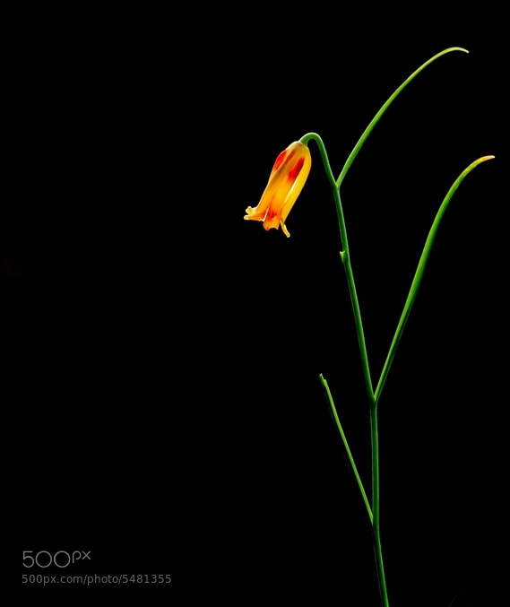 Photograph Night Light. by Necdet Yasar on 500px