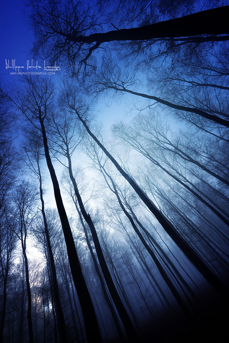 Photograph Blue Forest by Philippe Sainte-Laudy on 500px