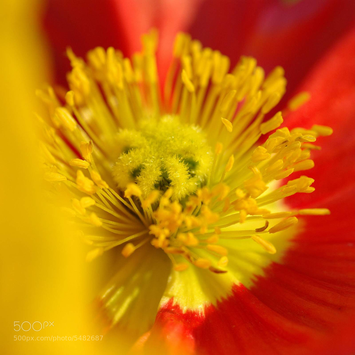 Photograph Flower 1 by Tushar B on 500px