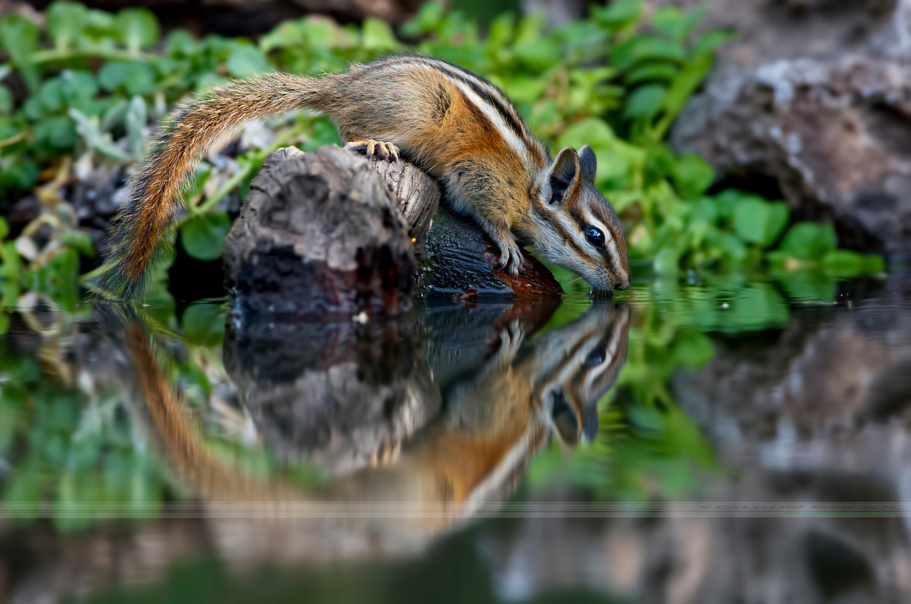 Photograph Circle of chipmunk by VERDON ROCKS on 500px
