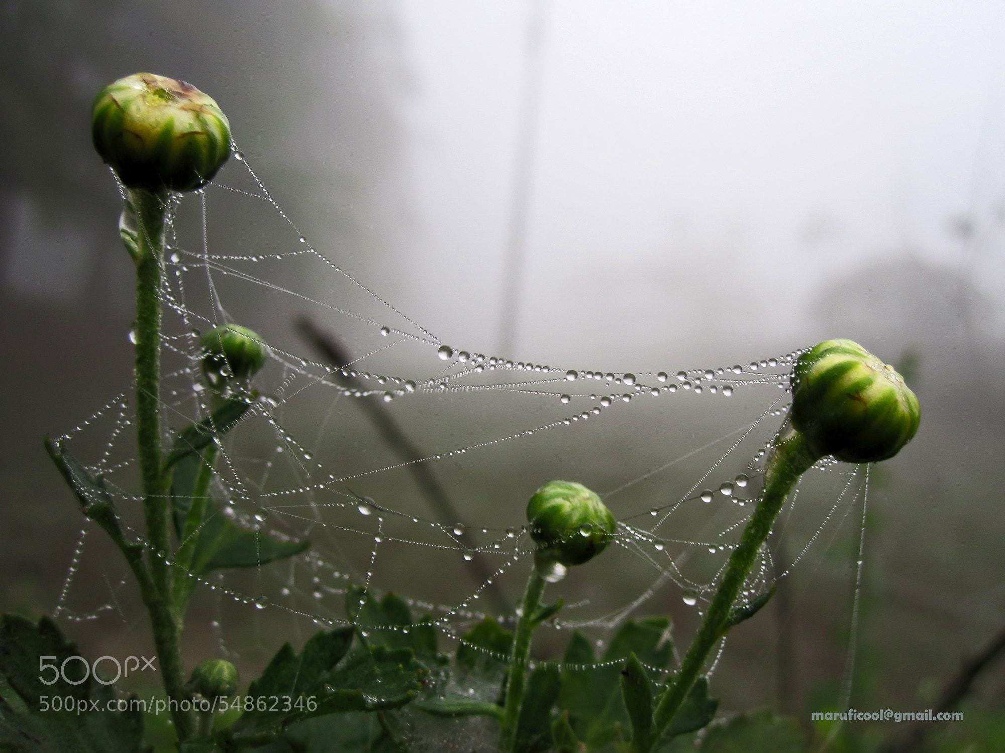 Photograph Water droplets by MAMUNUR RAHMAN on 500px