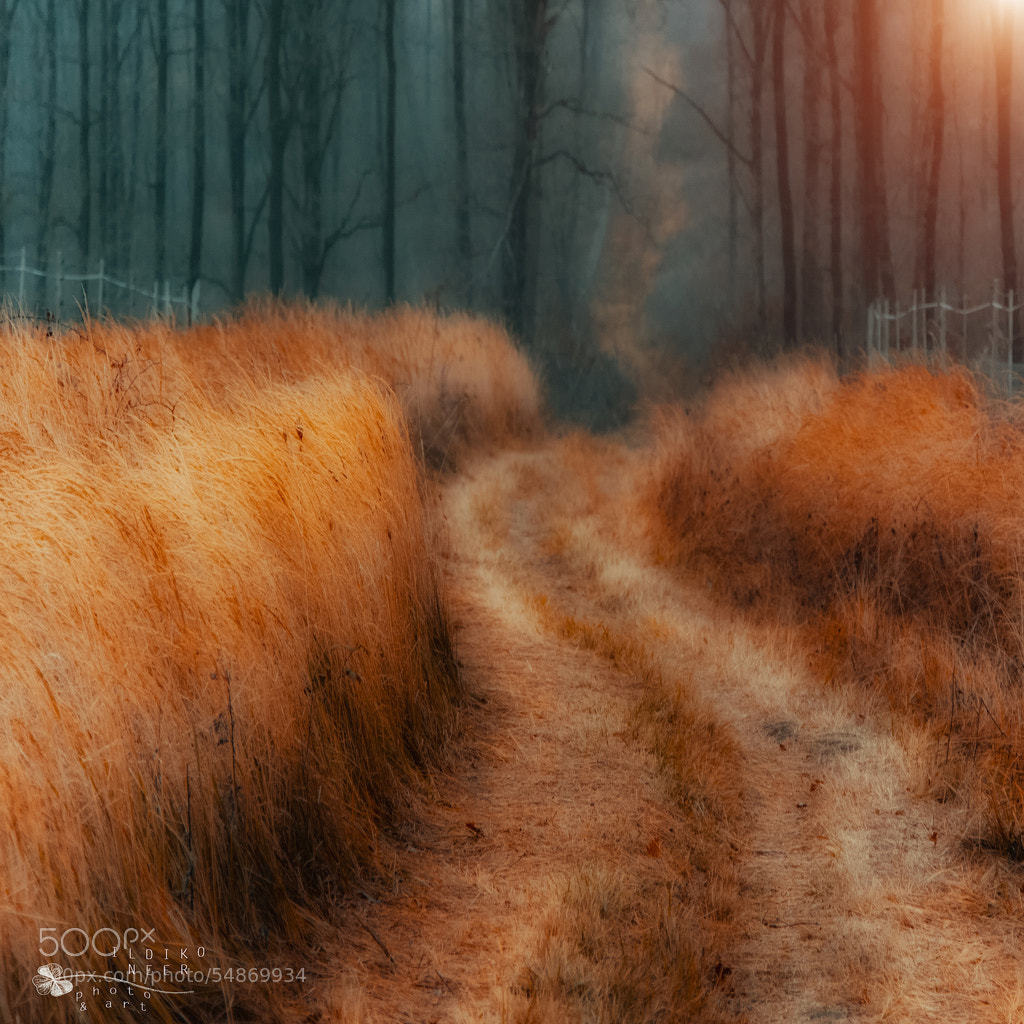 Photograph Gold of Grass by Ildiko Neer on 500px