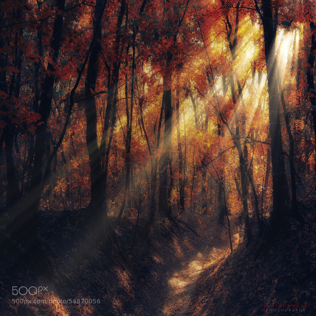 Photograph If You Smile by Ildiko Neer on 500px