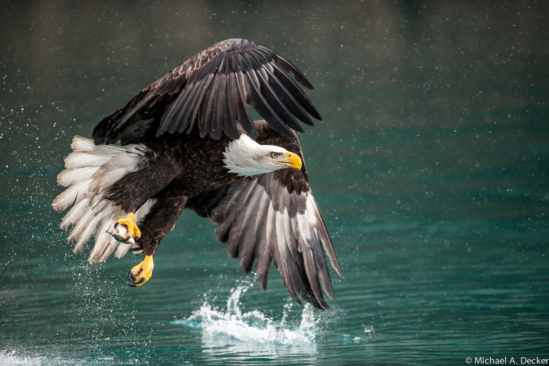 Photograph Fantastic Catch by Michael Decker on 500px