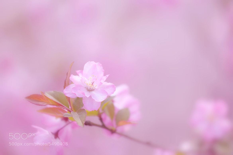 Photograph 春色 by Tashi_Delek Nakata on 500px